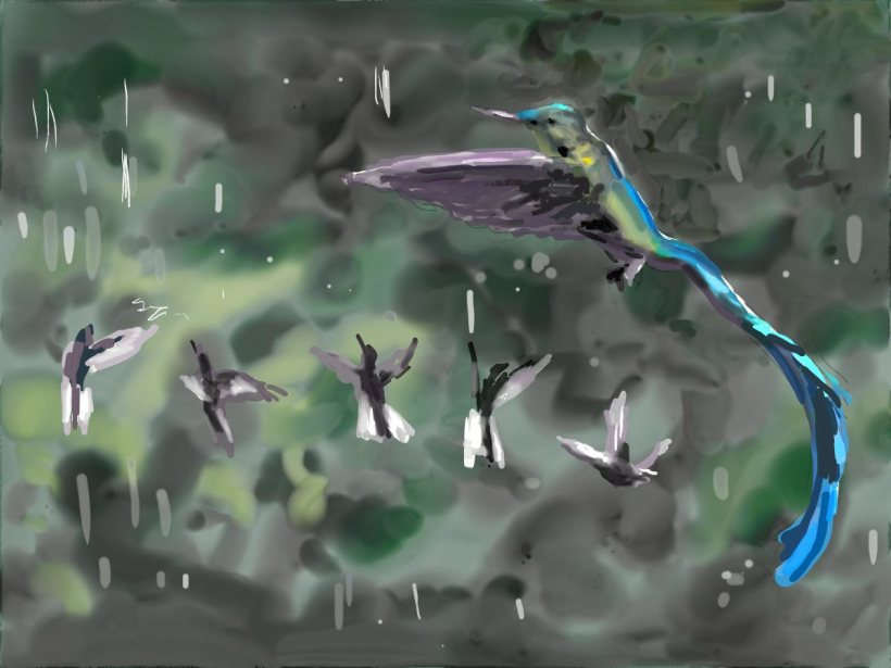 hummingbirds rain.jpg